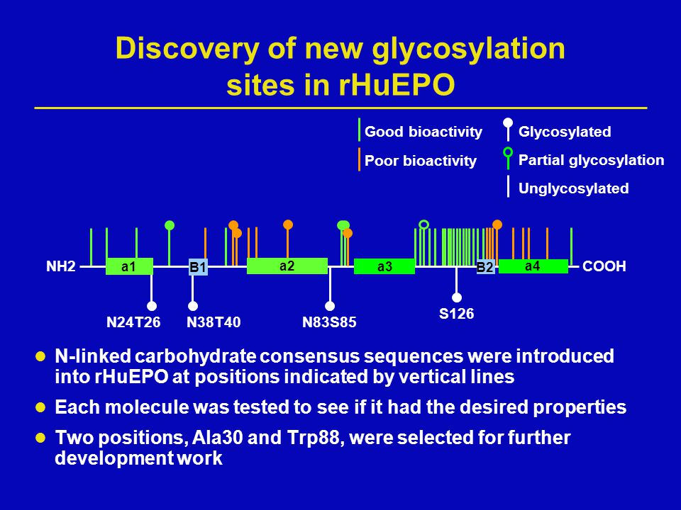 Discovery of new glycosylation sites in rHuEPO N-linked carbohydrate consensus sequences were introduced into rHuEPO at positions indicated by vertica