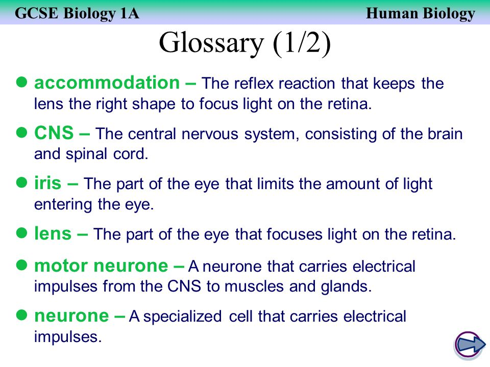 GCSE Biology 1AHuman Biology Glossary (1/2) accommodation – The reflex reaction that keeps the lens the right shape to focus light on the retina. CNS