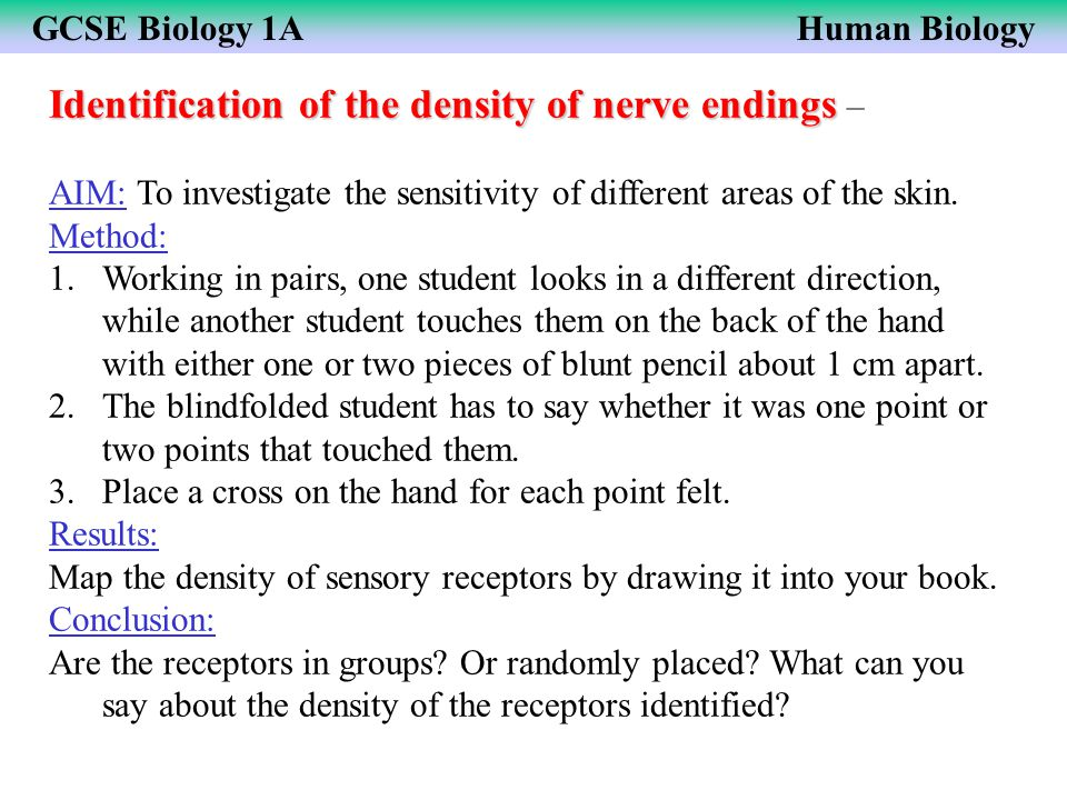GCSE Biology 1AHuman Biology Identification of the density of nerve endings Identification of the density of nerve endings – AIM: To investigate the s