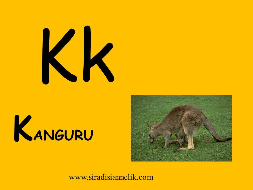 Kk K ANGURU www.siradisiannelik.com