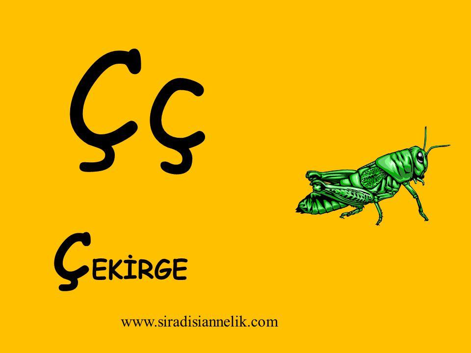 Çç Ç EKİRGE www.siradisiannelik.com