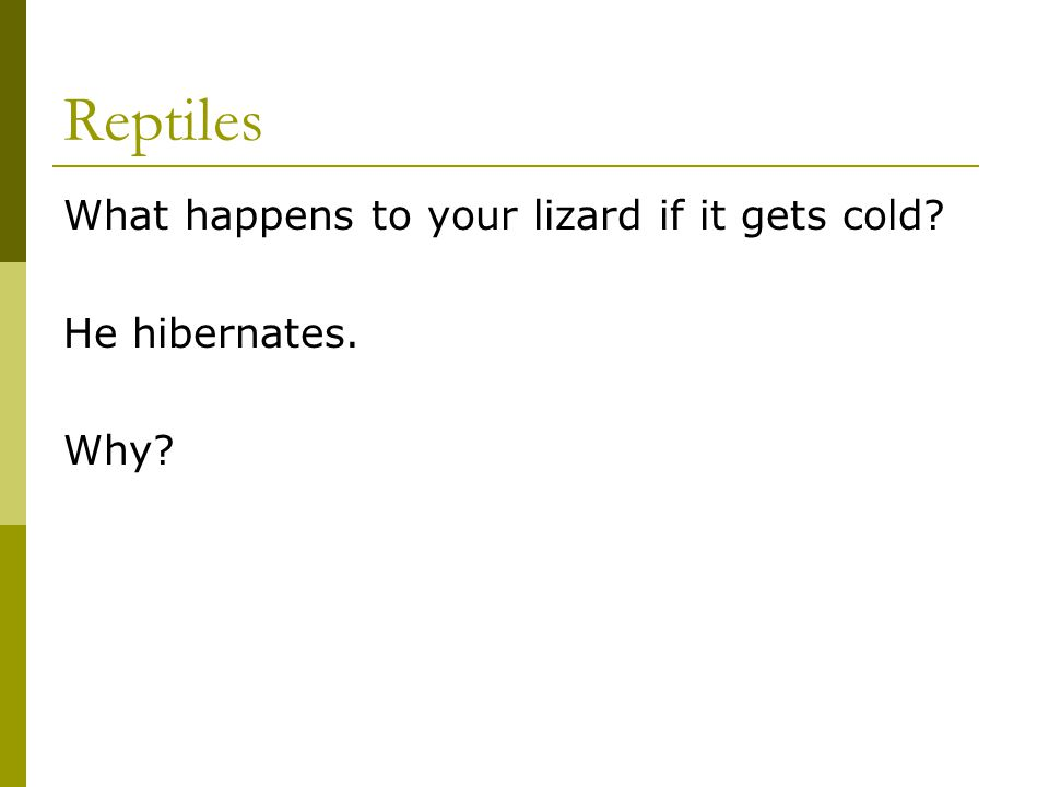 Reptiles What happens to your lizard if it gets cold? He hibernates. Why?