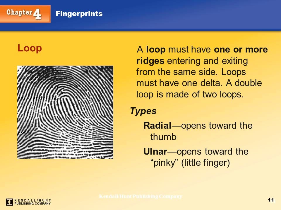 Chapter 4 Fingerprints 11 Kendall/Hunt Publishing Company 11 Loop A loop must have one or more ridges entering and exiting from the same side. Loops m