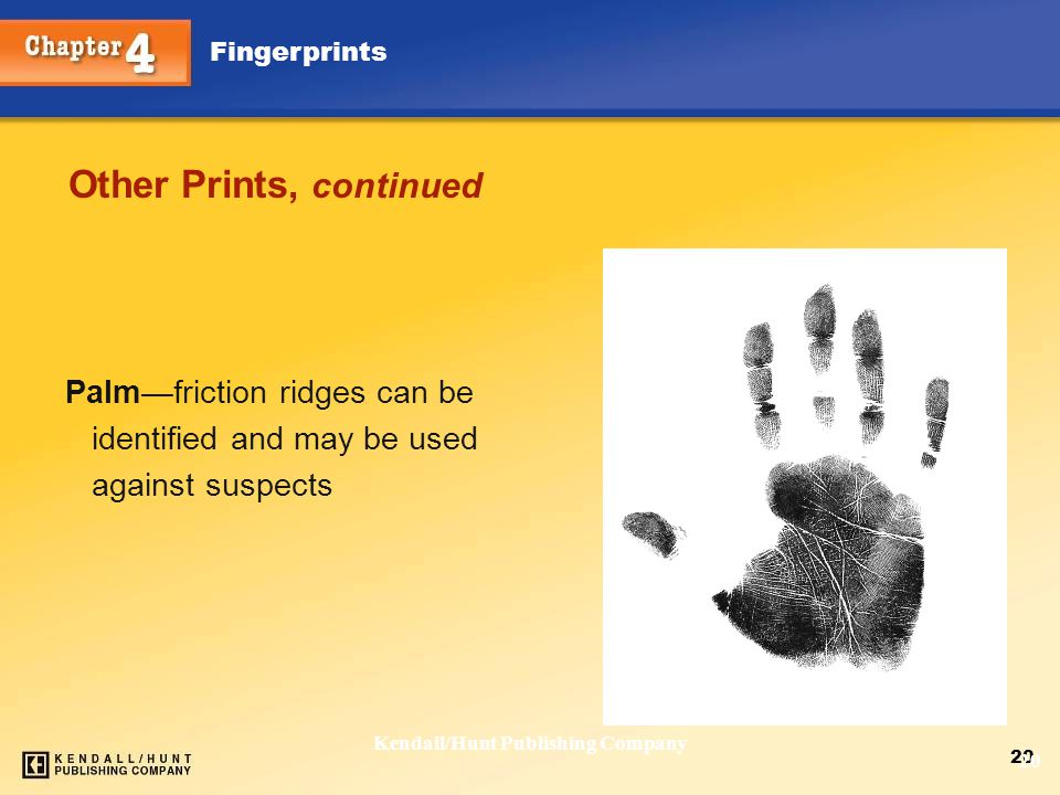 Chapter 4 Fingerprints 20 Kendall/Hunt Publishing Company 20 Other Prints, continued Palm—friction ridges can be identified and may be used against su