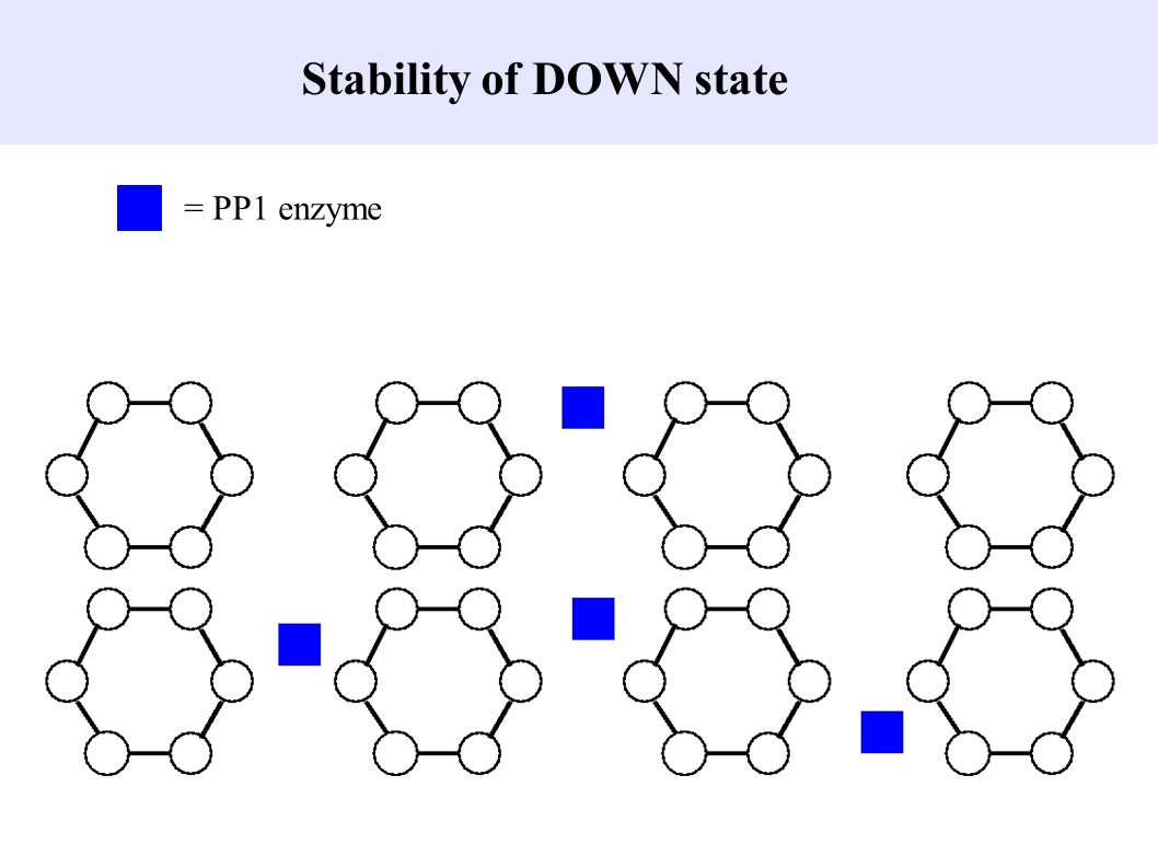 Stability of DOWN state = PP1 enzyme