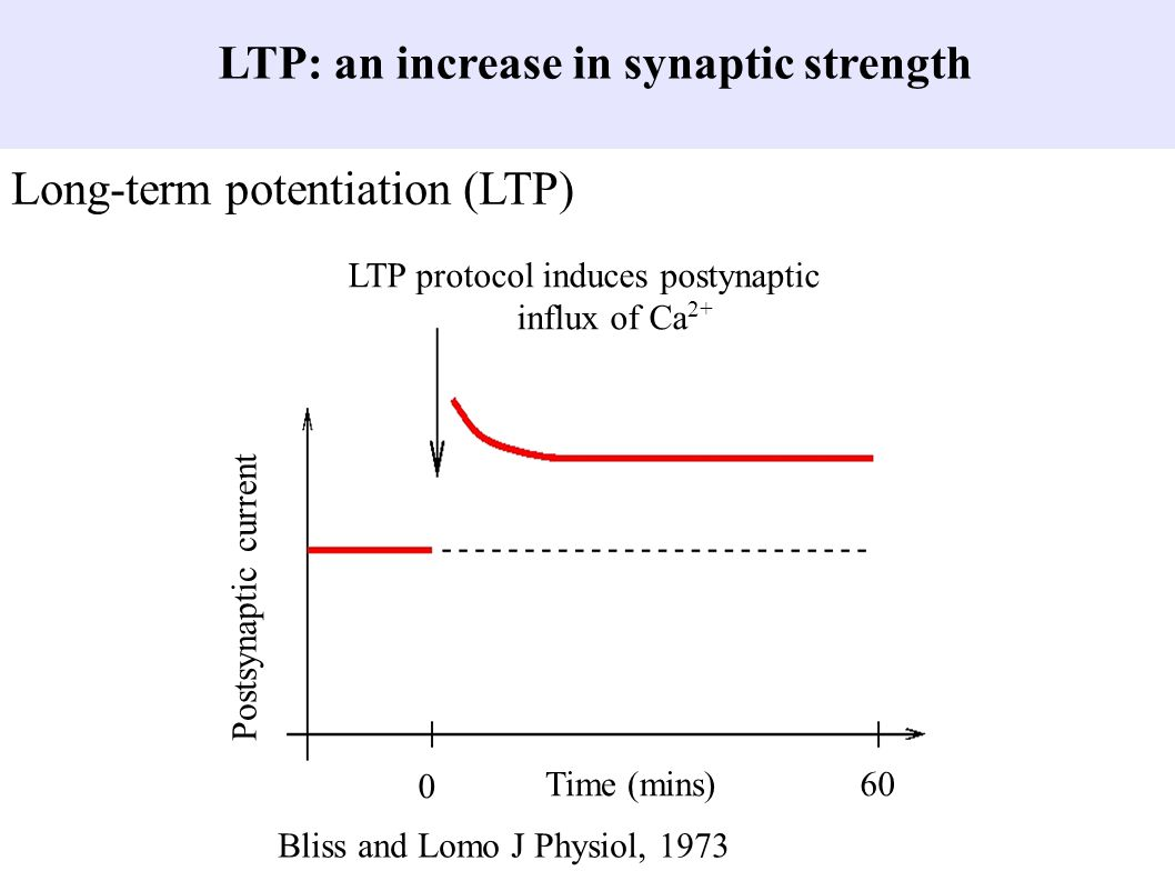 LTP: an increase in synaptic strength Long-term potentiation (LTP) Time (mins) 0 60 Postsynaptic current LTP protocol induces postynaptic influx of Ca