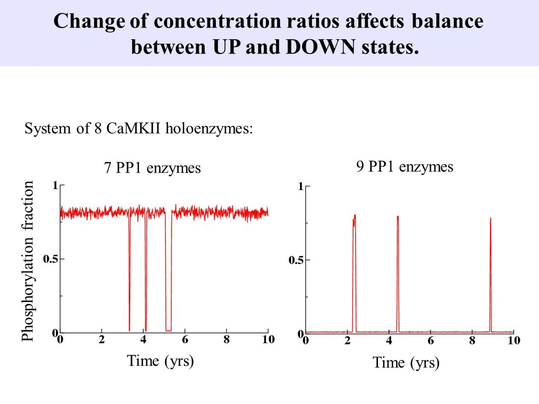 Change of concentration ratios affects balance between UP and DOWN states. System of 8 CaMKII holoenzymes: Time (yrs) Phosphorylation fraction 7 PP1 e