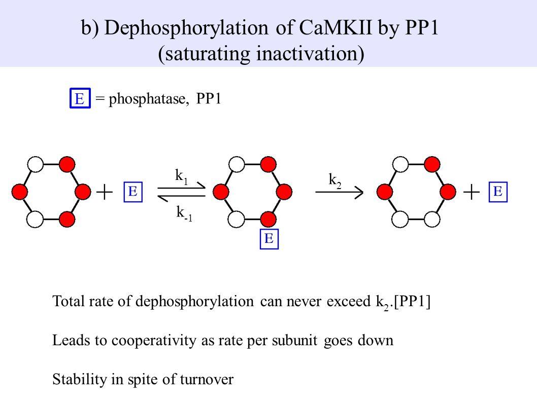E = phosphatase, PP1 b) Dephosphorylation of CaMKII by PP1 (saturating inactivation) k2k2 k1k1 k -1 Total rate of dephosphorylation can never exceed k