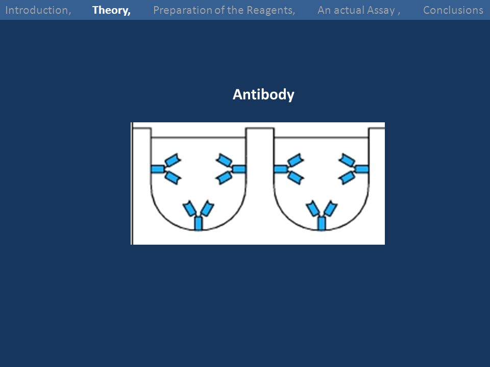 Antibody Introduction, Theory, Preparation of the Reagents, An actual Assay, Conclusions
