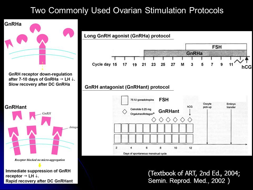 (Textbook of ART, 2nd Ed., 2004; Semin. Reprod. Med., 2002 ) Two Commonly Used Ovarian Stimulation Protocols