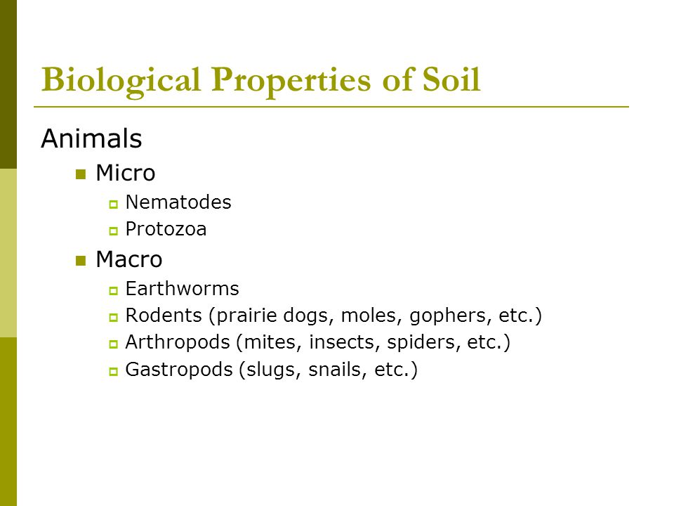 Biological Properties of Soil Animals Micro  Nematodes  Protozoa Macro  Earthworms  Rodents (prairie dogs, moles, gophers, etc.)  Arthropods (mit