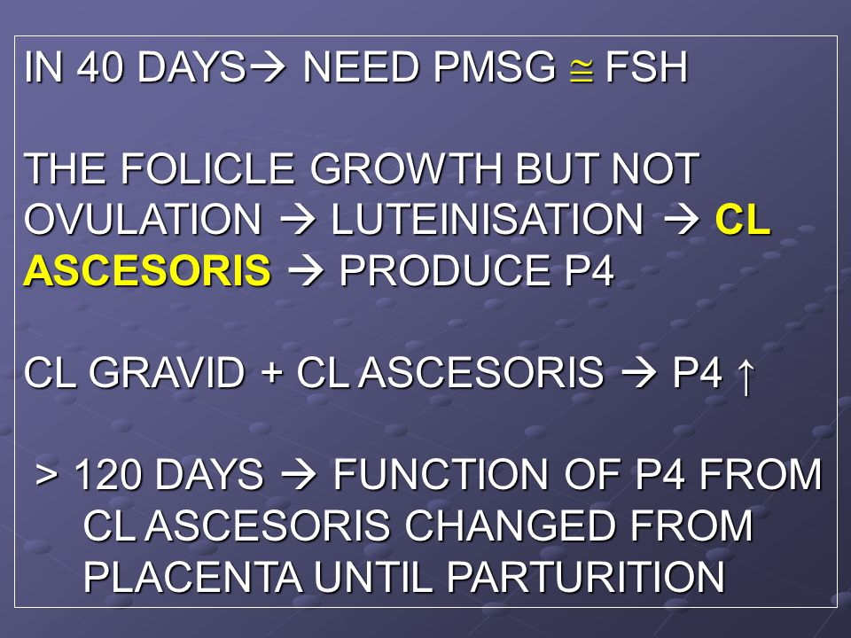 IN 40 DAYS  NEED PMSG  FSH THE FOLICLE GROWTH BUT NOT OVULATION  LUTEINISATION  CL ASCESORIS  PRODUCE P4 CL GRAVID + CL ASCESORIS  P4 ↑ > 120 DAYS  FUNCTION OF P4 FROM > 120 DAYS  FUNCTION OF P4 FROM CL ASCESORIS CHANGED FROM CL ASCESORIS CHANGED FROM PLACENTA UNTIL PARTURITION PLACENTA UNTIL PARTURITION