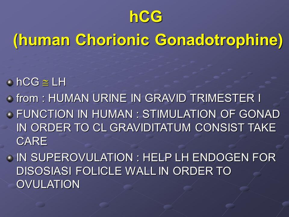 hCG (human Chorionic Gonadotrophine) (human Chorionic Gonadotrophine) hCG  LH from : HUMAN URINE IN GRAVID TRIMESTER I FUNCTION IN HUMAN : STIMULATIO