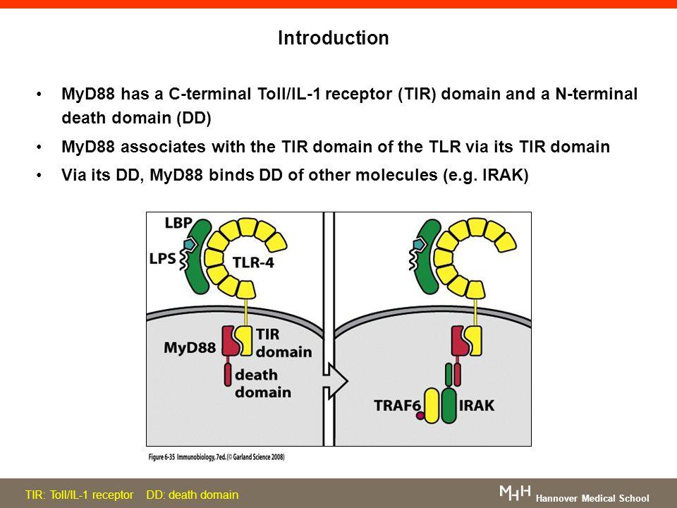 Introduction MyD88 has a C-terminal Toll/IL-1 receptor (TIR) domain and a N-terminal death domain (DD) MyD88 associates with the TIR domain of the TLR