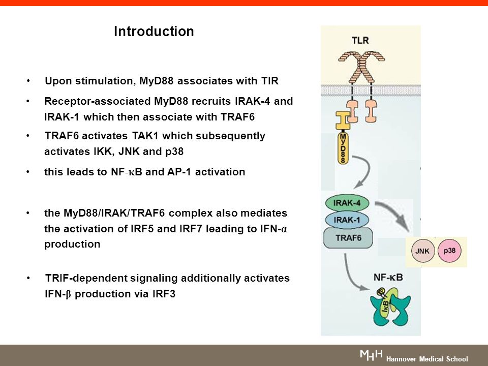 Conclusion MyD88- and IRAK-4-dependent TLRs and IL-1Rs play a narrow non- redundant role in protective immunity TIR-signaling seems to be less important for survival later in life maybe due to the compensatory effect of adaptive immunity (Be critical with this statement!) Is it surprising that MyD88-deficient mice suffer so much more than MyD88-deficient human.
