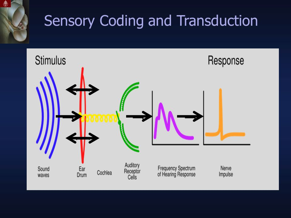 Sensory Coding and Transduction