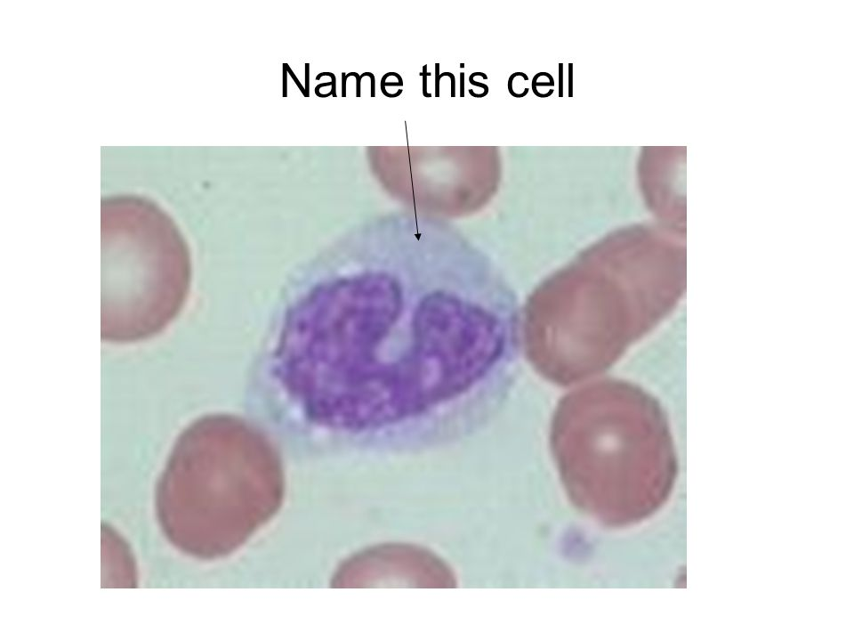 Name this cell
