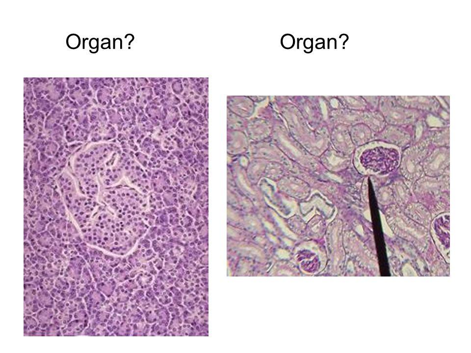 Organ? Organ?