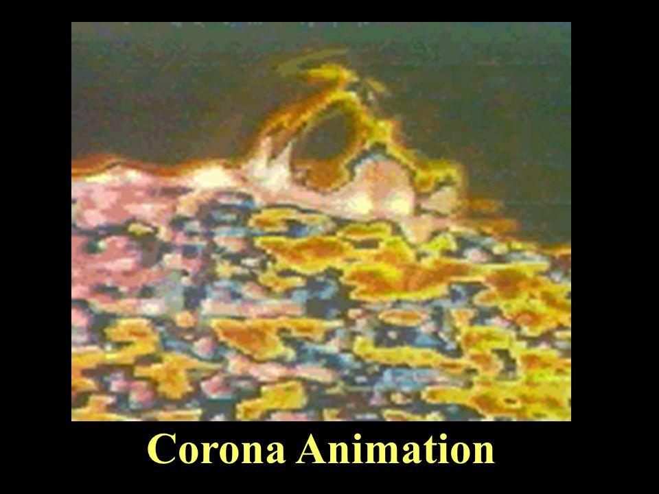 Corona Animation