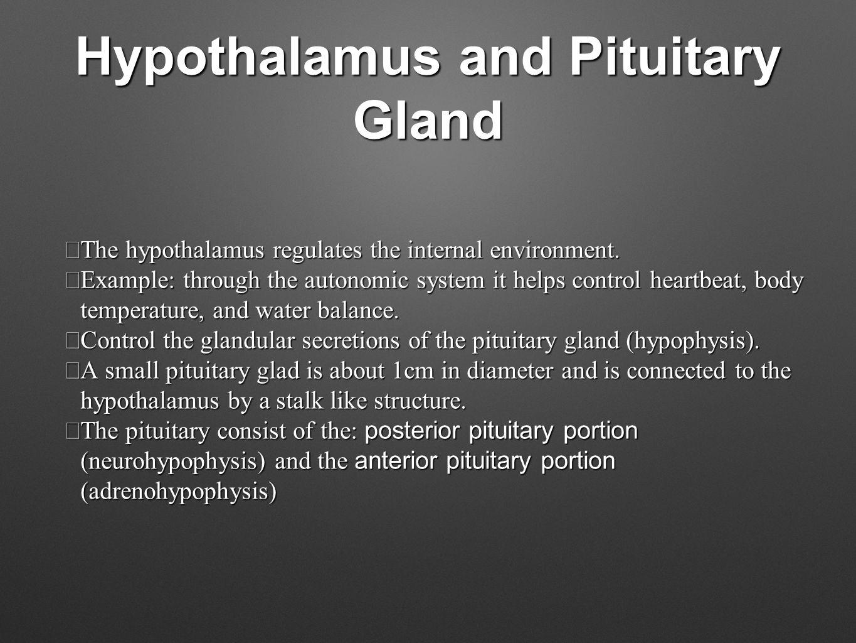 Hypothalamus and Pituitary Gland  The hypothalamus regulates the internal environment.