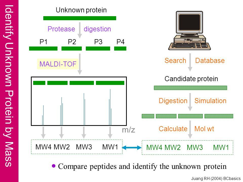 MALDI-TOF Protease digestion ● Compare peptides and identify the unknown protein m/z P1P2P3P4 MW4MW2MW3MW1 Unknown protein Search Database Candidate p