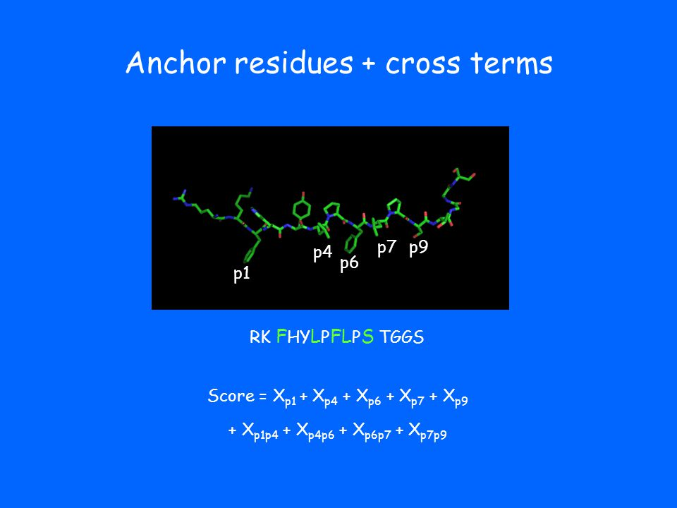 Anchor residues + cross terms p1 p4 p6 p9 RK F HY L P FL P S TGGS p7 Score = X p1 + X p4 + X p6 + X p7 + X p9 + X p1p4 + X p4p6 + X p6p7 + X p7p9