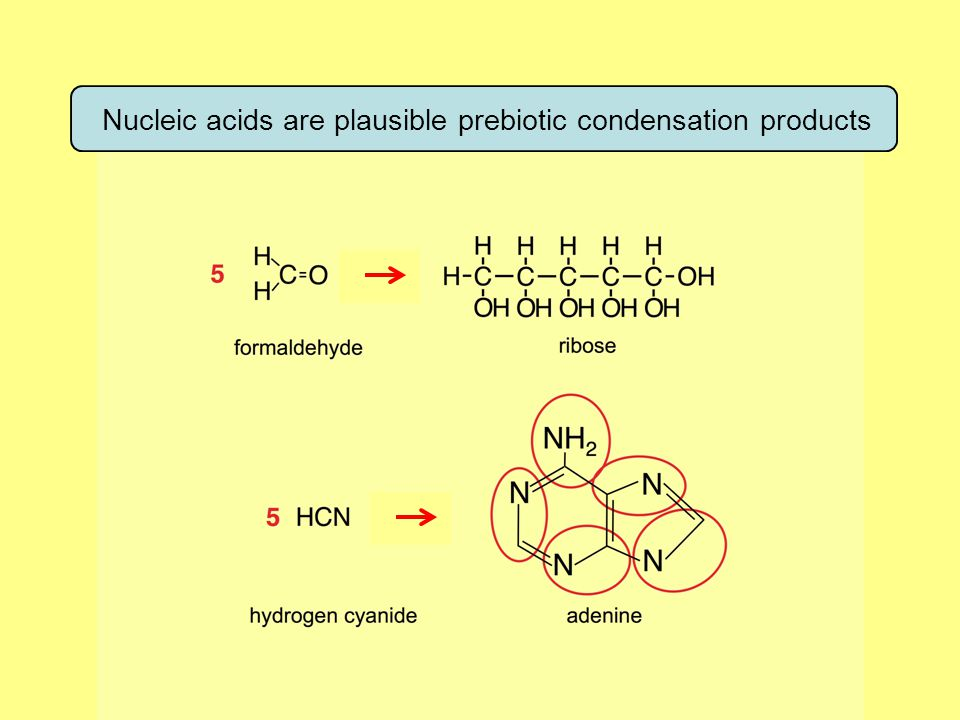 Nucleic acids are plausible prebiotic condensation products