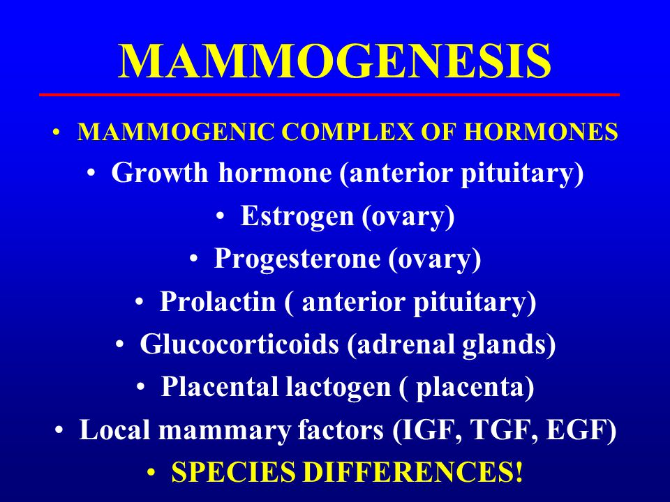 GROWTH HORMONE Produced in the anterior pituitary Been shown to influence mammary development even in the fetal stages Mammary parenchyma: + correlated to GH Receptors on epithelial / stromal tissue MOST EFFECTS MEDIATED THROUGH LOCAL STROMAL FACTORS (IGF)