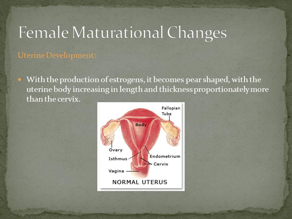 Ovarian Development: 1 The rising levels of plasma gonadotropins stimulate the ovary to produce increasing amounts of estradiol.