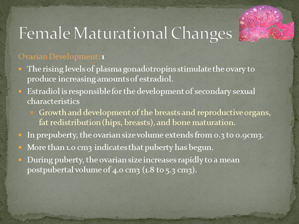 Menarche During puberty, plasma estradiol levels fluctuate widely, probably reflecting successive waves of follicular development that fail to reach the ovulatory stage.