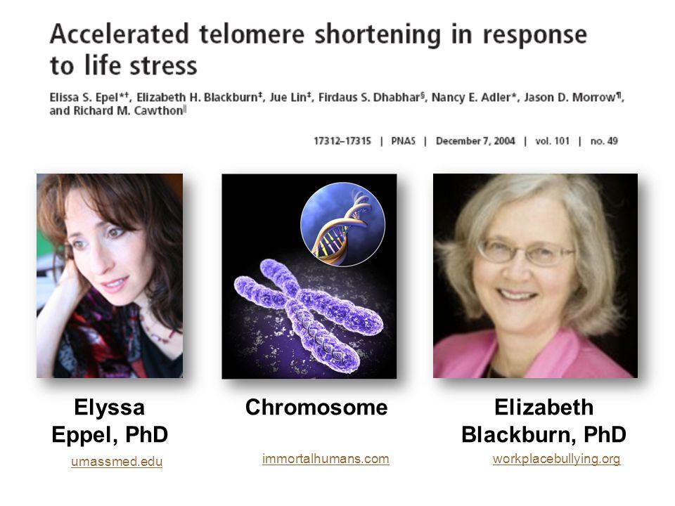 immortalhumans.com umassmed.edu workplacebullying.org Elyssa Eppel, PhD Elizabeth Blackburn, PhD Chromosome