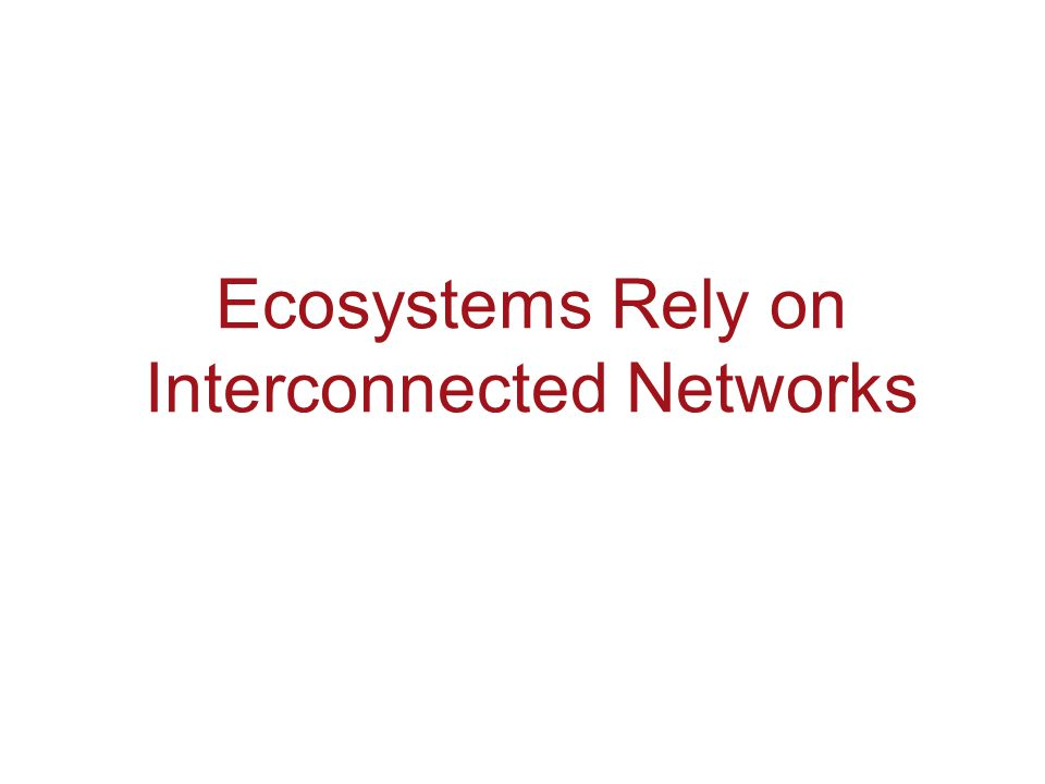 Ecosystems Rely on Interconnected Networks