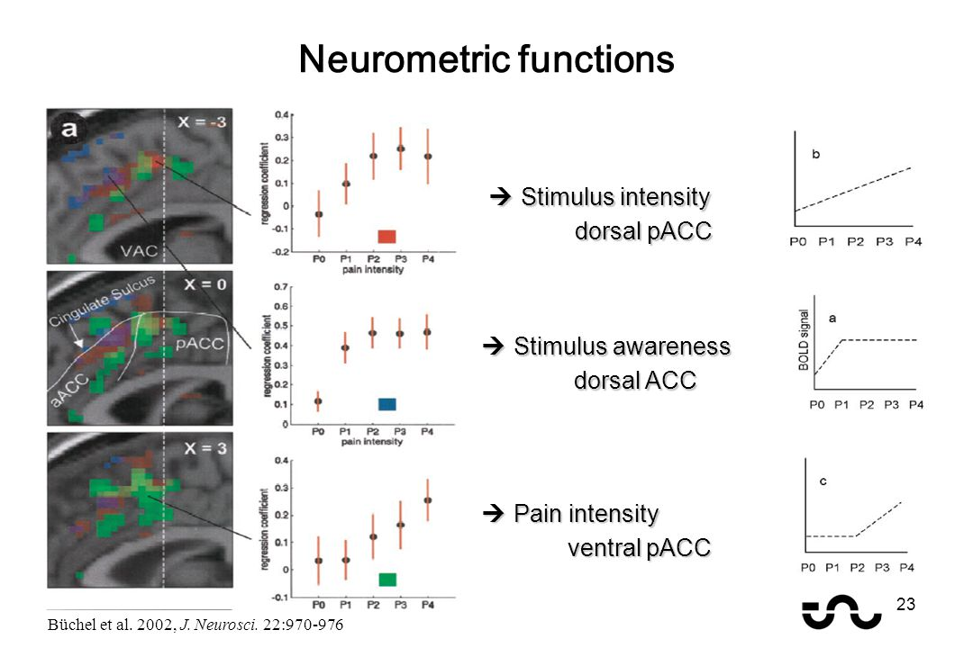 Neurometric functions  Stimulus awareness dorsal ACC dorsal ACC  Pain intensity ventral pACC  Stimulus intensity dorsal pACC Büchel et al. 2002, J.