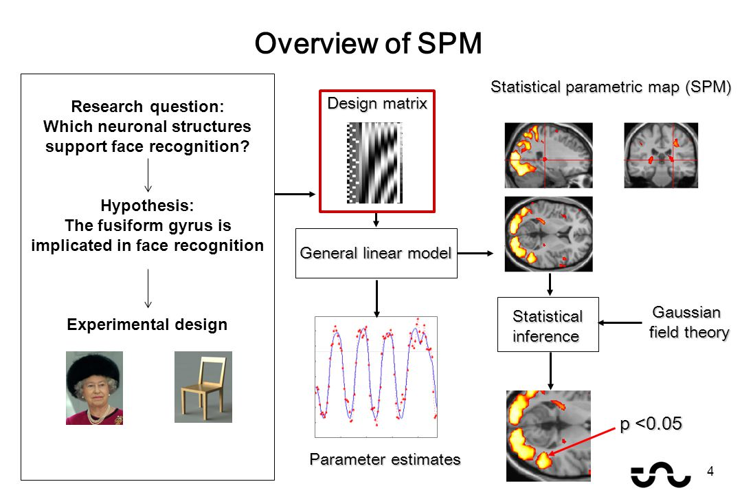 Overview of SPM General linear model Statistical parametric map (SPM) Parameter estimates Design matrix Gaussian field theory p <0.05 Statisticalinference 4 Research question: Which neuronal structures support face recognition.