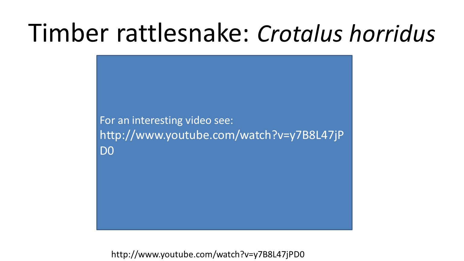 For an interesting video see: http://www.youtube.com/watch v=y7B8L47jP D0 Timber rattlesnake: Crotalus horridus http://www.youtube.com/watch v=y7B8L47jPD0