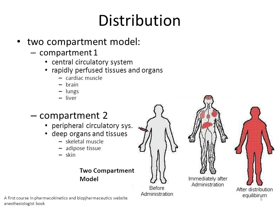 two compartment model: – compartment 1 central circulatory system rapidly perfused tissues and organs – cardiac muscle – brain – lungs – liver – compartment 2 peripheral circulatory sys.