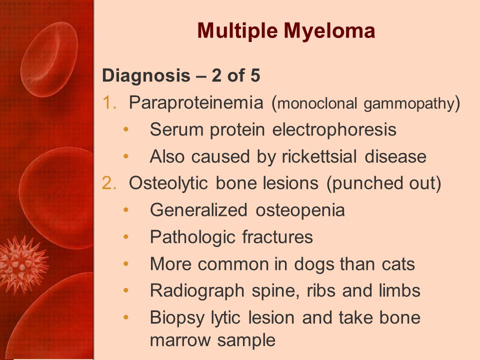 Multiple Myeloma Diagnosis – 2 of 5 1.Paraproteinemia ( monoclonal gammopathy ) Serum protein electrophoresis Also caused by rickettsial disease 2.Osteolytic bone lesions (punched out) Generalized osteopenia Pathologic fractures More common in dogs than cats Radiograph spine, ribs and limbs Biopsy lytic lesion and take bone marrow sample