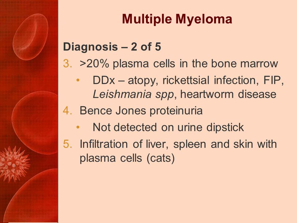 Multiple Myeloma Diagnosis – 2 of 5 3.>20% plasma cells in the bone marrow DDx – atopy, rickettsial infection, FIP, Leishmania spp, heartworm disease 4.Bence Jones proteinuria Not detected on urine dipstick 5.Infiltration of liver, spleen and skin with plasma cells (cats)