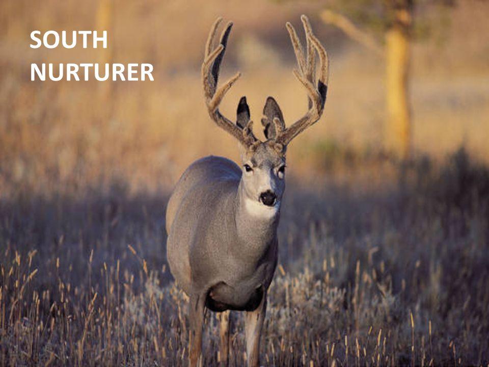 SOUTH NURTURER