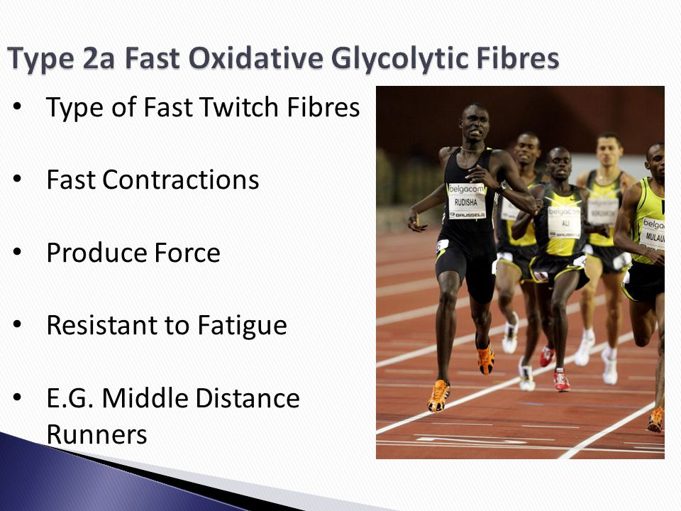 Type of Fast Twitch Fibres Fast Contractions Produce Force Resistant to Fatigue E.G. Middle Distance Runners