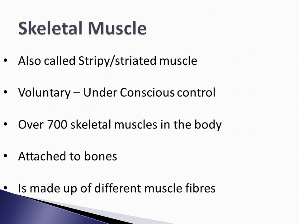 Also called Stripy/striated muscle Voluntary – Under Conscious control Over 700 skeletal muscles in the body Attached to bones Is made up of different