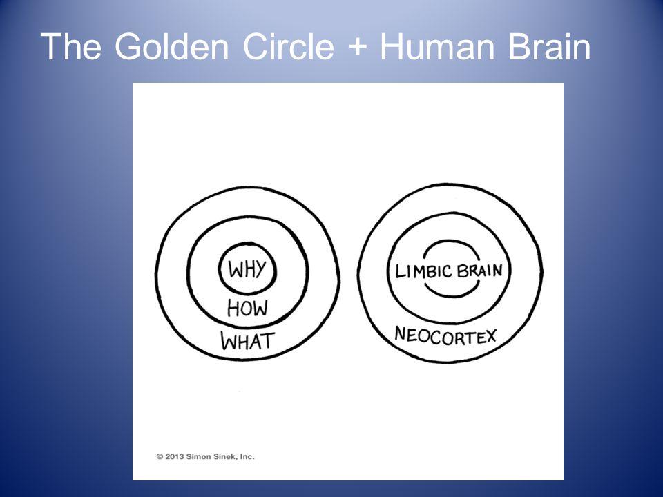 The Golden Circle + Human Brain