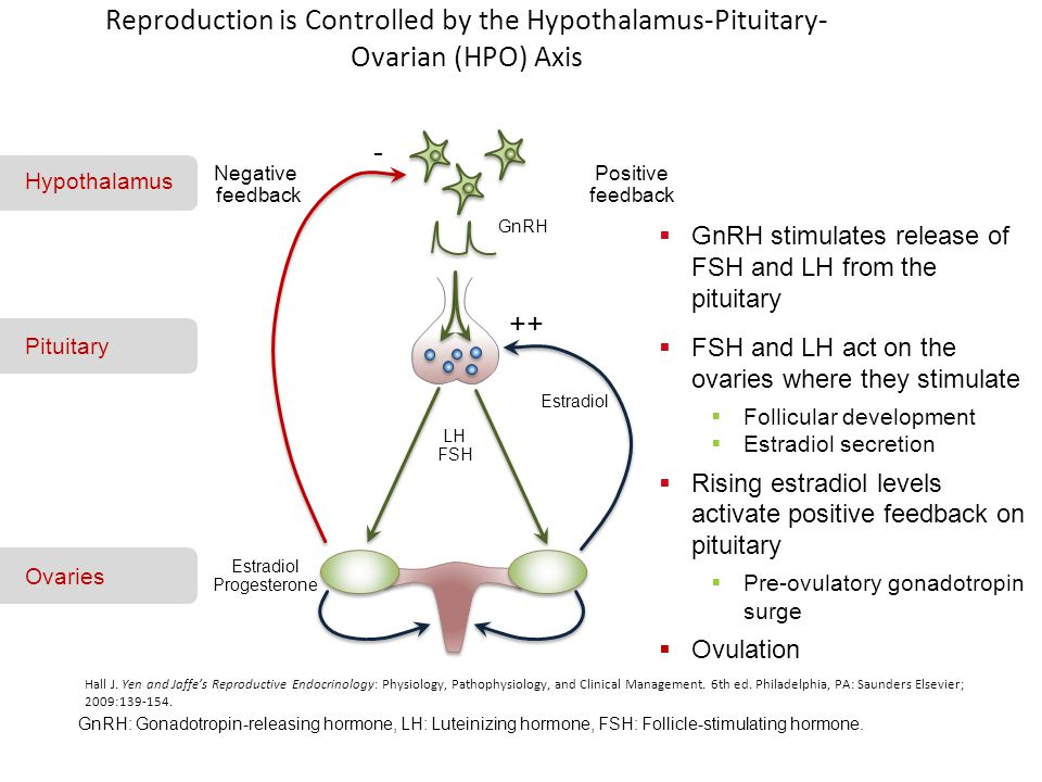 Reproduction is Controlled by the Hypothalamus-Pituitary- Ovarian (HPO) Axis Hall J. Yen and Jaffe's Reproductive Endocrinology: Physiology, Pathophys