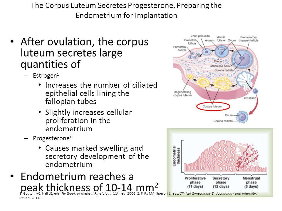 The Corpus Luteum Secretes Progesterone, Preparing the Endometrium for Implantation After ovulation, the corpus luteum secretes large quantities of –