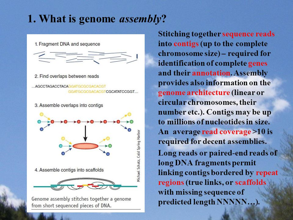 Stitching together sequence reads into contigs (up to the complete chromosome size) – required for identification of complete genes and their annotati