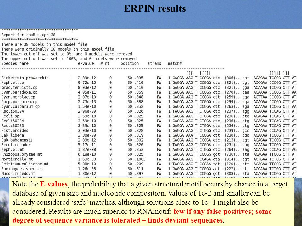 ERPIN results Note the E-values, the probability that a given structural motif occurs by chance in a target database of given size and nucleotide comp