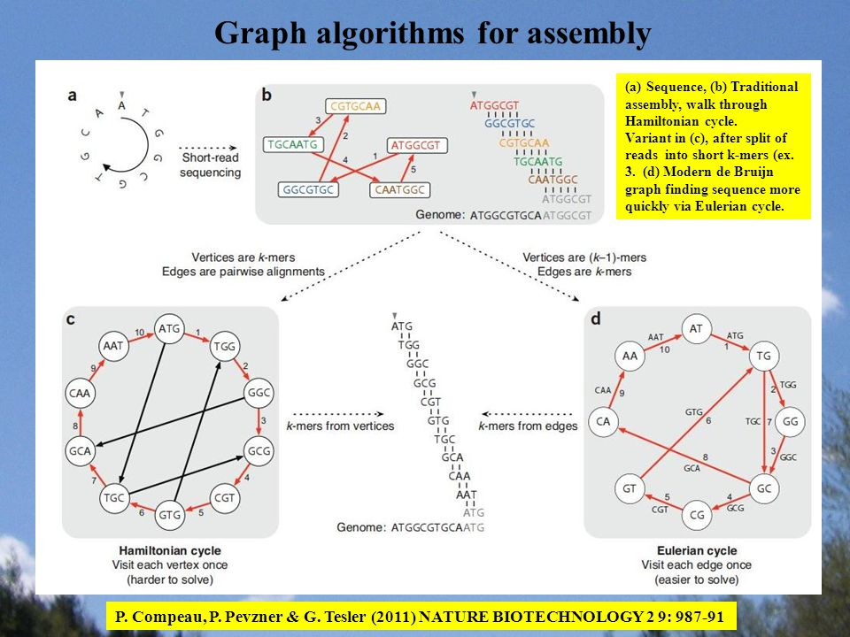Graph algorithms for assembly P. Compeau, P. Pevzner & G. Tesler (2011) NATURE BIOTECHNOLOGY 2 9: 987-91 (a)Sequence, (b) Traditional assembly, walk t
