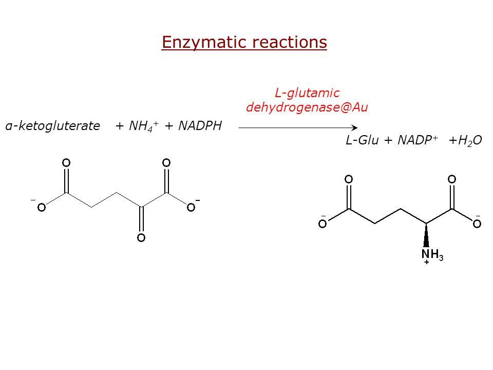 α-ketogluterate + NH 4 + + NADPH L-Glu + NADP + +H 2 O L-glutamic dehydrogenase@Au Enzymatic reactions