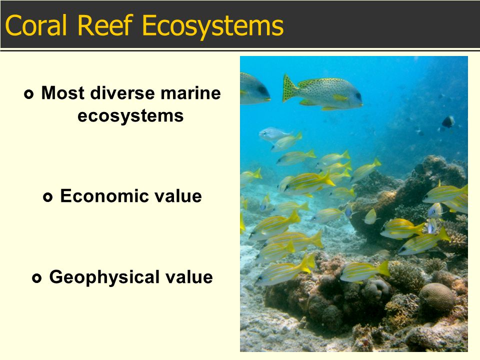 Coral Reef Ecosystems  Most diverse marine ecosystems  Economic value  Geophysical value