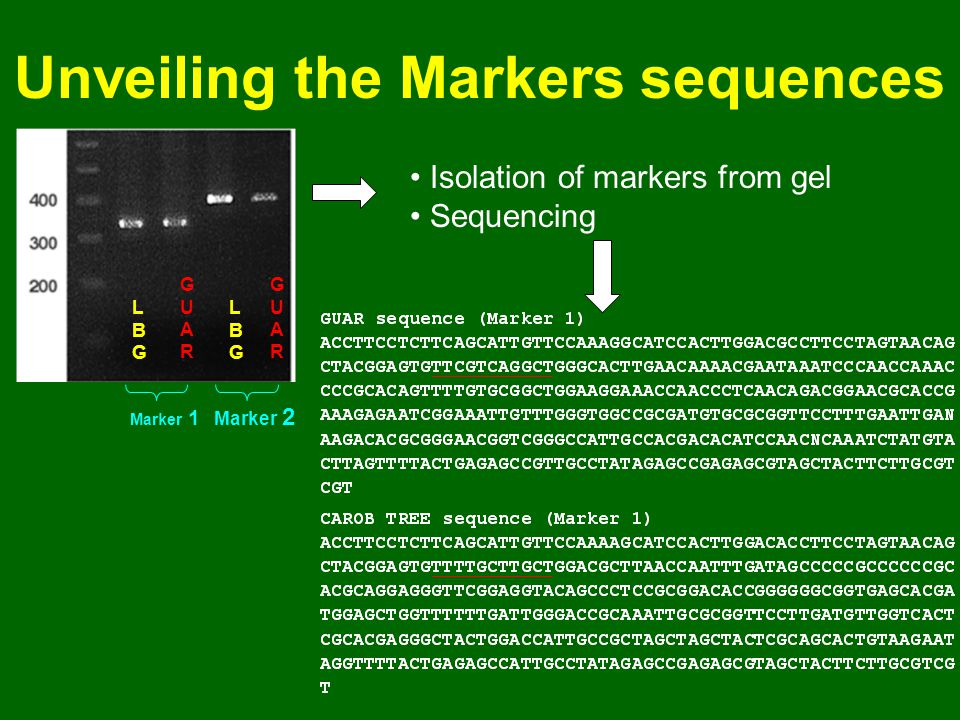 Unveiling the Markers sequences Marker 1 Marker 2 LBGLBG LBGLBG GUARGUAR GUARGUAR Isolation of markers from gel Sequencing